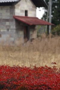 Red Leaves and Brown Grass